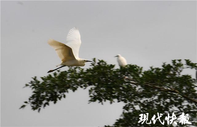 轨道上的大湾区,为小鸟天堂按下静音键